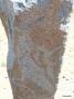 005 Deer Stone - detail